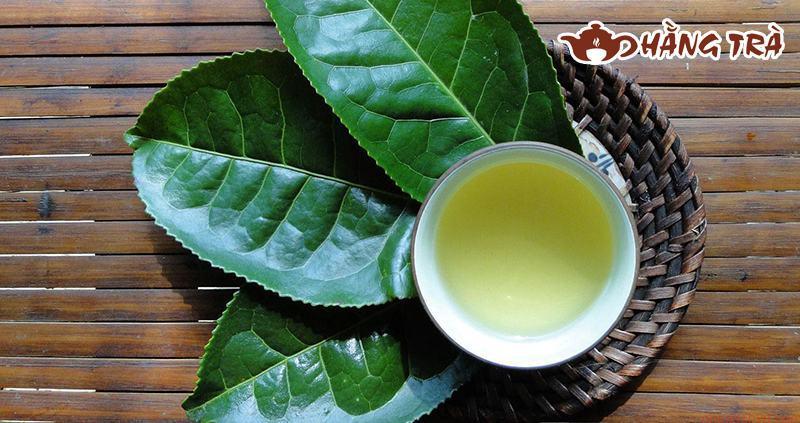 <strong>cách nấu lá trà xanh tươi</strong>