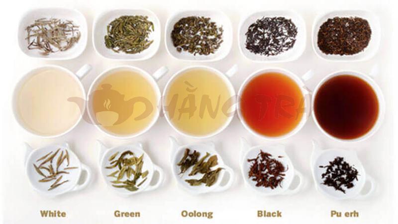 trà là gì