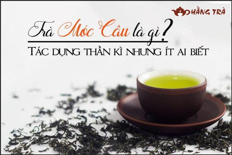 trà móc câu là gì